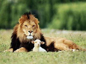 lion-lamb-free-image