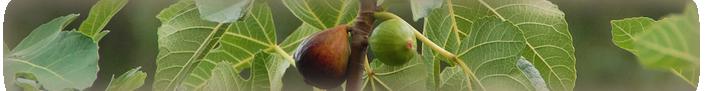 fig-banner-contoured
